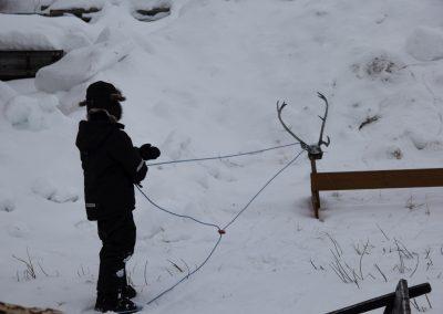 reindeer_sledding_alta_3